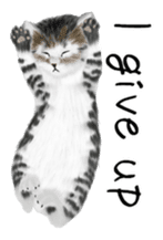real cats(Eng ver.) sticker #2715584