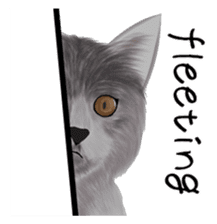 real cats(Eng ver.) sticker #2715586