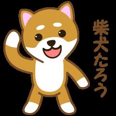 Taro Shiba Inu