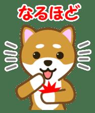 Taro Shiba Inu sticker #2725264