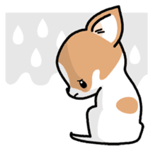 Kawaii Chihuahua (English) sticker #2752369