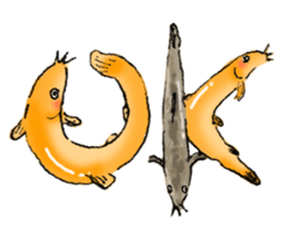 Golden Dojo Loach Sticker sticker #2782844