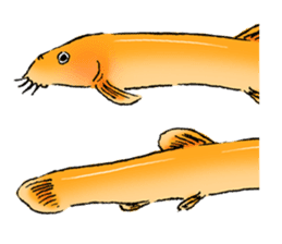 Golden Dojo Loach Sticker sticker #2782853
