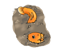 Golden Dojo Loach Sticker sticker #2782859