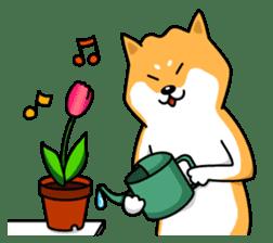 Shiba Inu Genki No.2 (Housework ver.) sticker #2805303