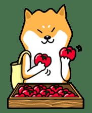 Shiba Inu Genki No.2 (Housework ver.) sticker #2805311