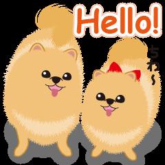 Pomeranian Reena & Hime