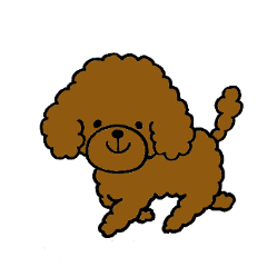 """The pretty toy poodle """"MOMO"""""""
