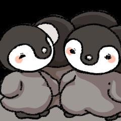 Emperor penguin!1st