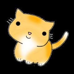 Cute kitten colon