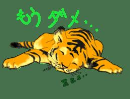 i am higth pride tiger sticker #3009739