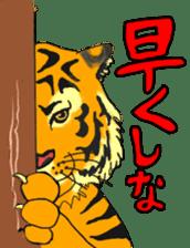 i am higth pride tiger sticker #3009762