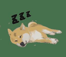 Life with Shiba-Inu sticker #3022857