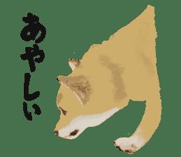 Life with Shiba-Inu sticker #3022869