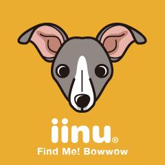 iinu - Italian Greyhound