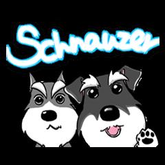 SCHNAUZER TORO & FRIENDS