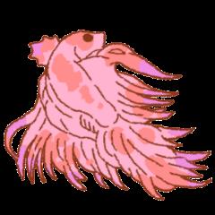 FlutteringBetta