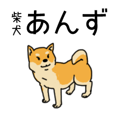 Anz the Japanese shiba dog