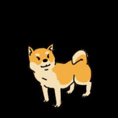 Anz the Japanese shiba dog