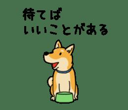 Anz the Japanese shiba dog sticker #3202175