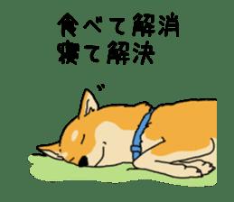 Anz the Japanese shiba dog sticker #3202179