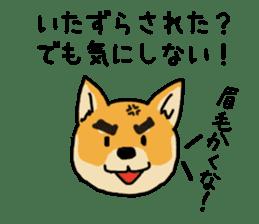 Anz the Japanese shiba dog sticker #3202186