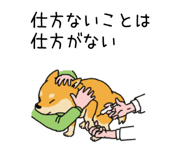 Anz the Japanese shiba dog sticker #3202192