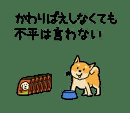 Anz the Japanese shiba dog sticker #3202200