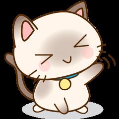 Funny Siamese kitten