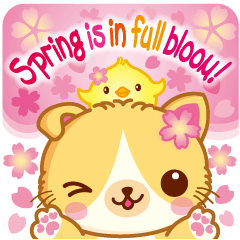 MunchkinCat!Spring is in full bloom!Eng.