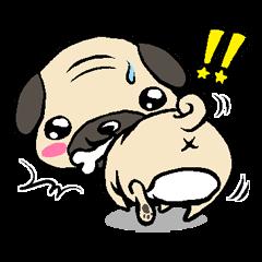 Cutie Pug