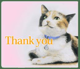 Colored pencil Cat sticker sticker #3343450