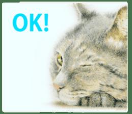 Colored pencil Cat sticker sticker #3343453