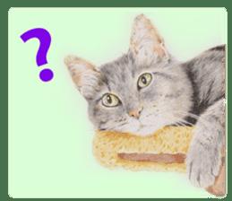 Colored pencil Cat sticker sticker #3343454