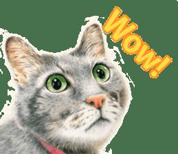 Colored pencil Cat sticker sticker #3343459