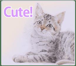 Colored pencil Cat sticker sticker #3343462