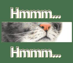 Colored pencil Cat sticker sticker #3343476