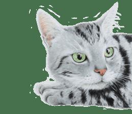 Colored pencil Cat sticker sticker #3343478