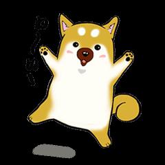 Shiba-Inu KOTAN