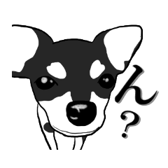 Black chihuahua sticker