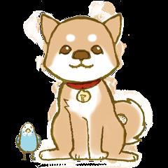 Shiba dog NENE spends warm one day