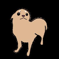 Chihuahua of Sticker