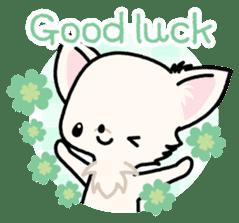 Kawaii Chihuahua 3 (English) sticker #3523302
