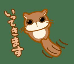Kawaii!.Sticker of Flying squirrel sticker #3642361
