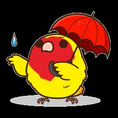 Misslovebird-Cute Lovebird