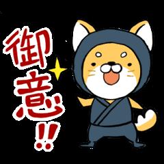Shibainu Ninja