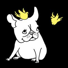 French bull POTATO