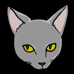 Gray Cat !