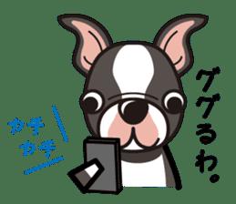 iinu - Boston Terrier sticker #3812528