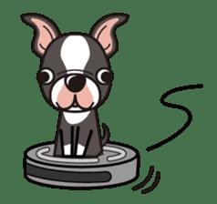 iinu - Boston Terrier sticker #3812530